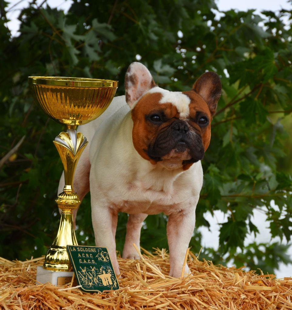 Du Clan De Sido - Jackie est CHAMPION de Belgique