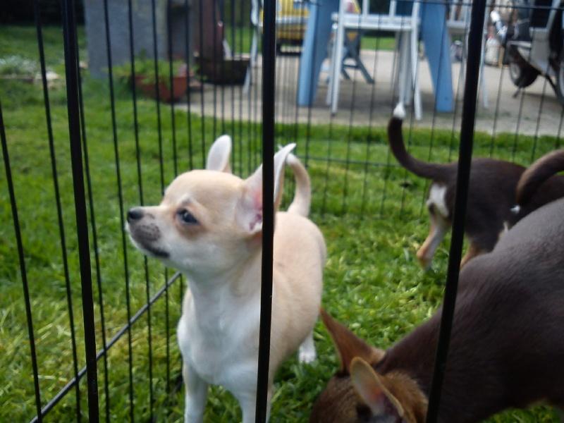 rencontre chien adulte chiot rencontre entre un chien adulte et un chiot