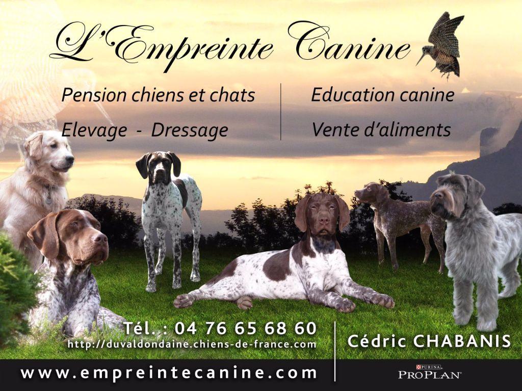 Les Braque Français Du Val D'Ondaine