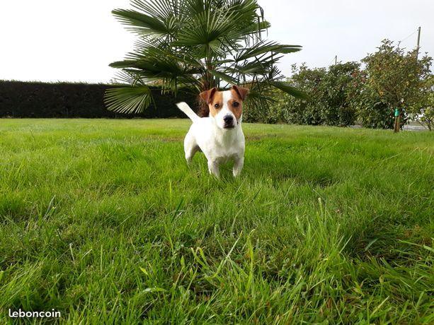 Publication : Des Terriers Du Marsan  Auteur : Mme Saint Martin Anne