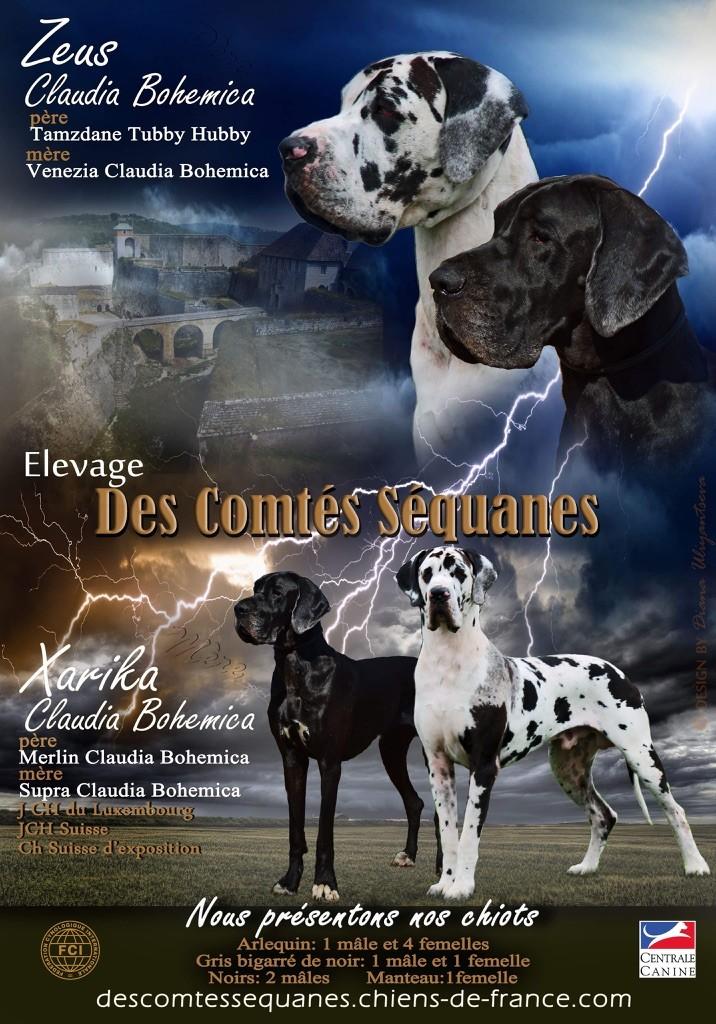 Des Comtés Séquanes - Grande nouvelle!!!!