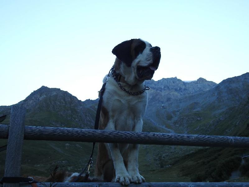 CH. Apollon (dit a'perro) De L'orée Des Montagnes