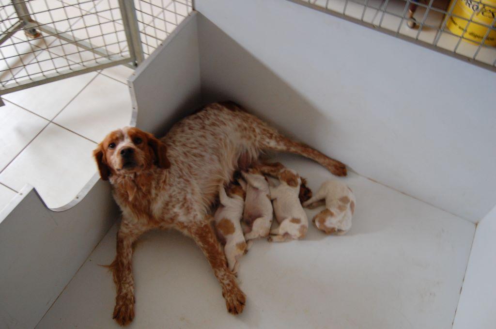du chène de sophie - Les chiots sont nés.