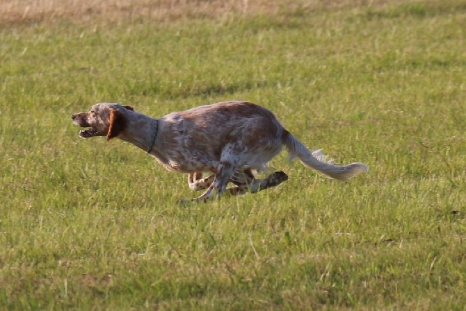 Accueil - Elevage Des Belles Du Causse - eleveur de chiens