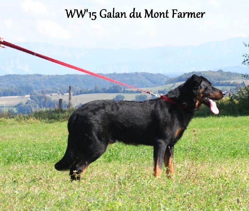 Publication : Du Mont Farmer  Auteur : bmmz