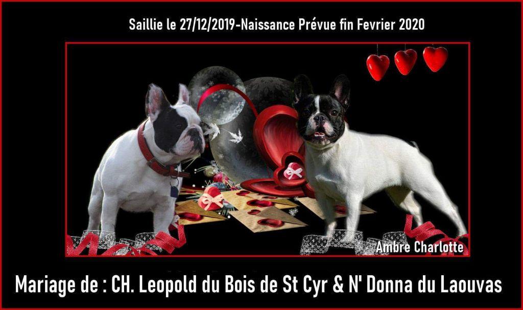 Des Boules De Benat - Léopold du Bois de Saint Cyr et N'Donna du Laouvas