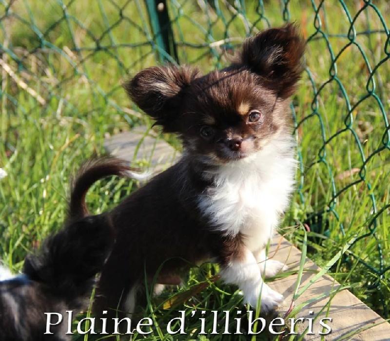 Publication : De La Plaine D'illiberis  Auteur : A&S