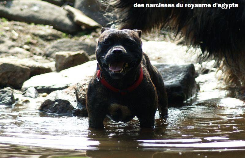 Publication : Des Narcisses Du Royaume D'egypte  Auteur : Roques Alicia