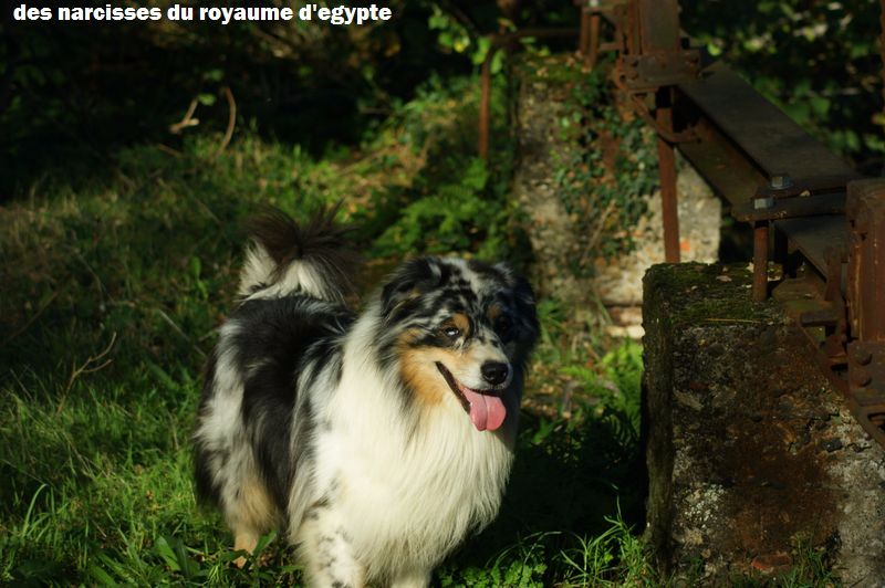 Publication : Des Narcisses Du Royaume D'egypte  Auteur : Alicia Roques