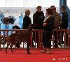 - Ethna CACS et Meilleur de race à Flexicourt le 06 mars 2011