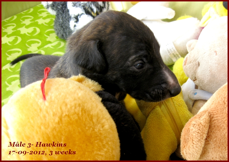 Hawkins for ever Du domaine de pharamond