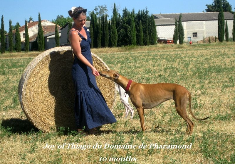 CH. Joy of thiago Du domaine de pharamond