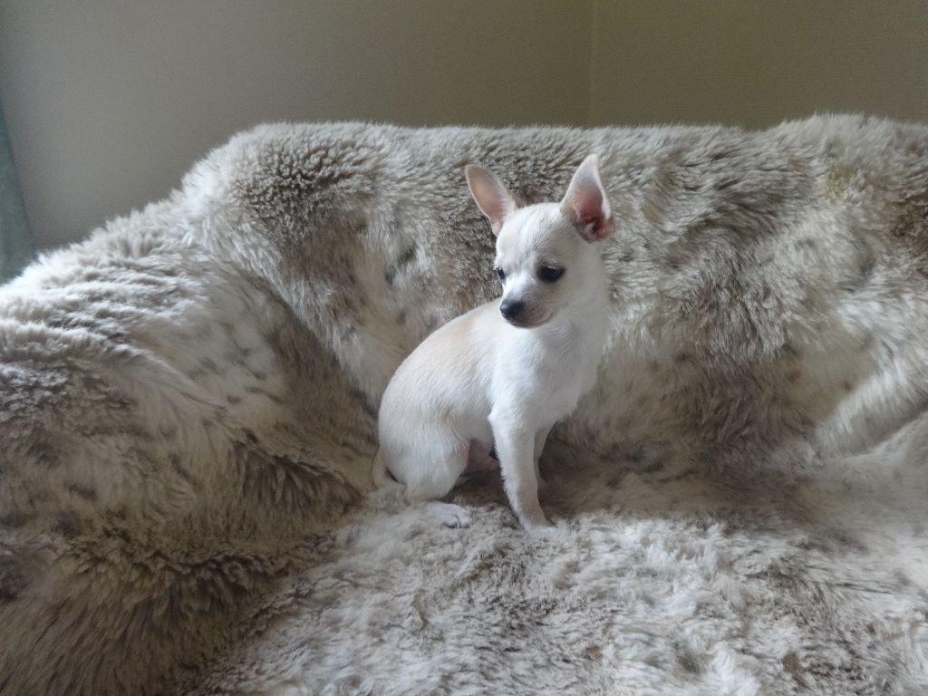 nazario - Chihuahua