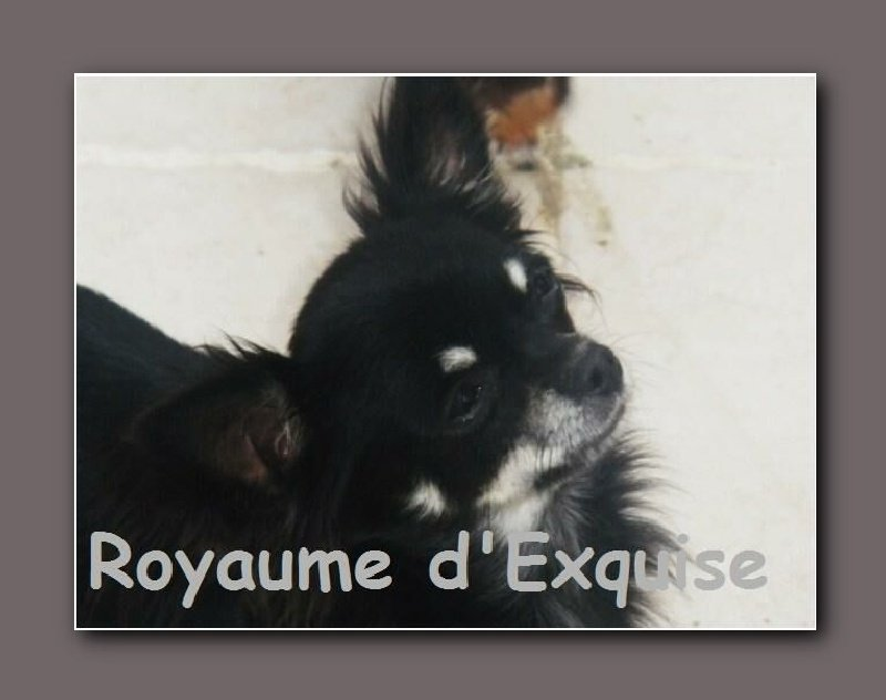 Publication : Du Royaume D'exquise