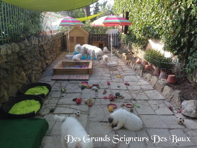 Des Grands Seigneurs Des Baux - L'écho des Alpilles 19