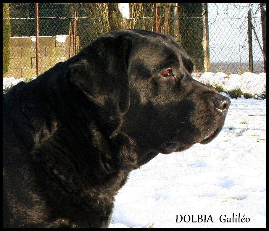 dolbia Galiléo