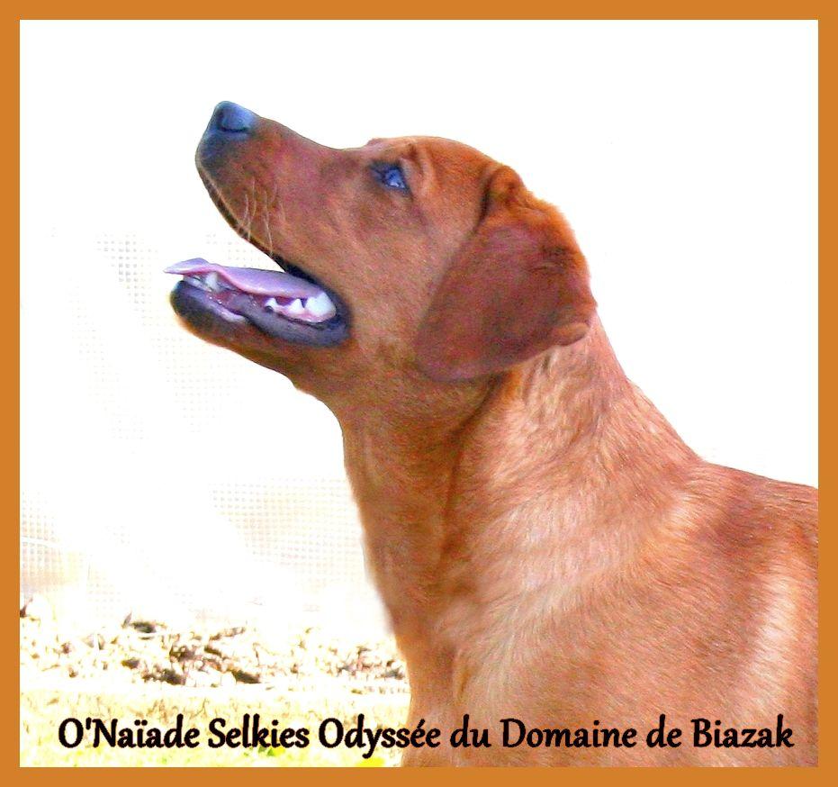 O'naÏade selkie's odyssee Du Domaine De Biazak