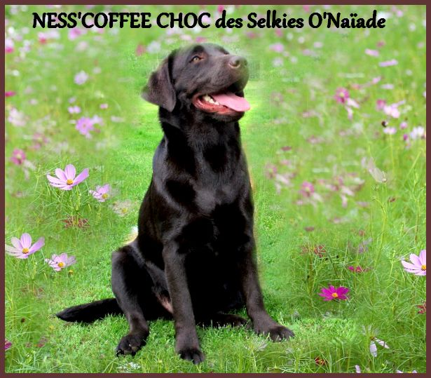 Ness'coffee choc Des Selkies O'naïade