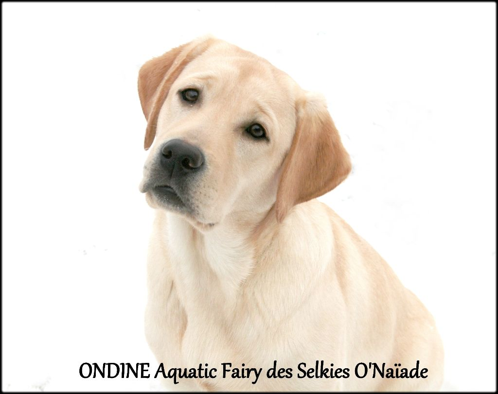 Ondine aquatic fairy Des Selkies O'naïade