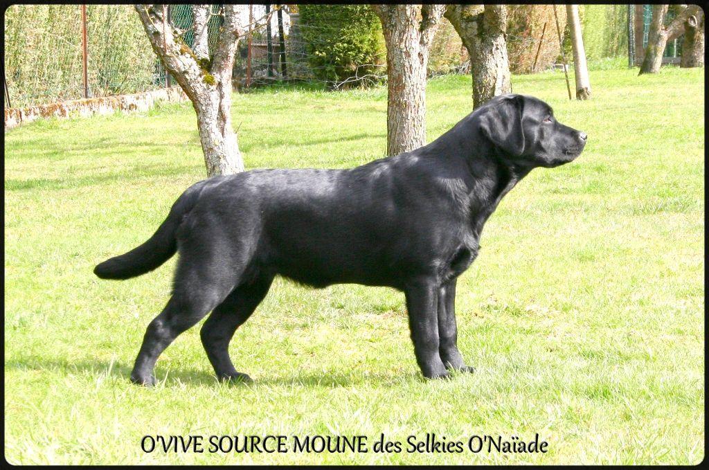 O'vive source moune Des Selkies O'naïade