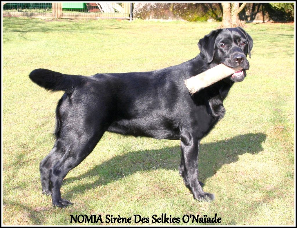 Nomia sirène Des Selkies O'naïade