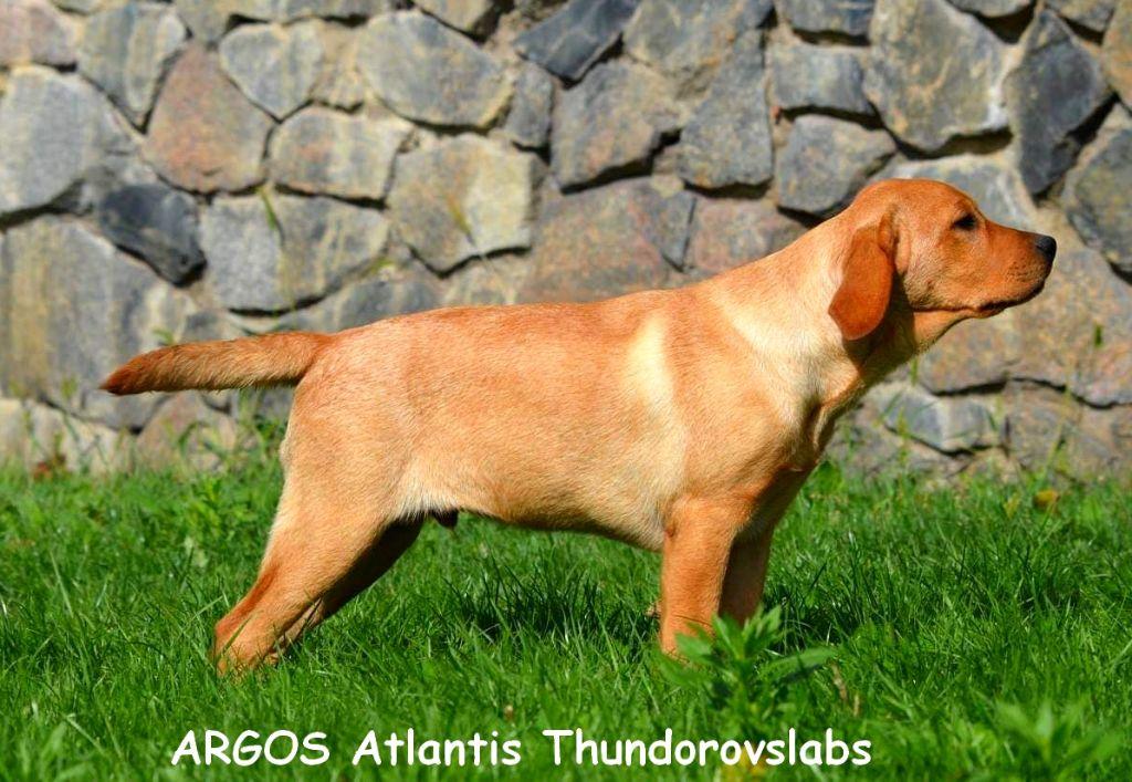 Argos atlantis thunderovslabs