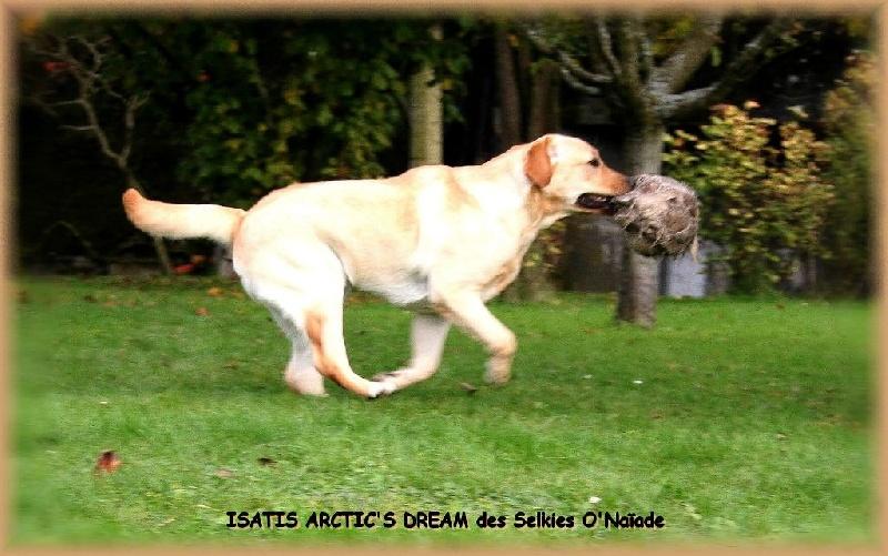 Isatis arctic's dream Des Selkies O'naïade