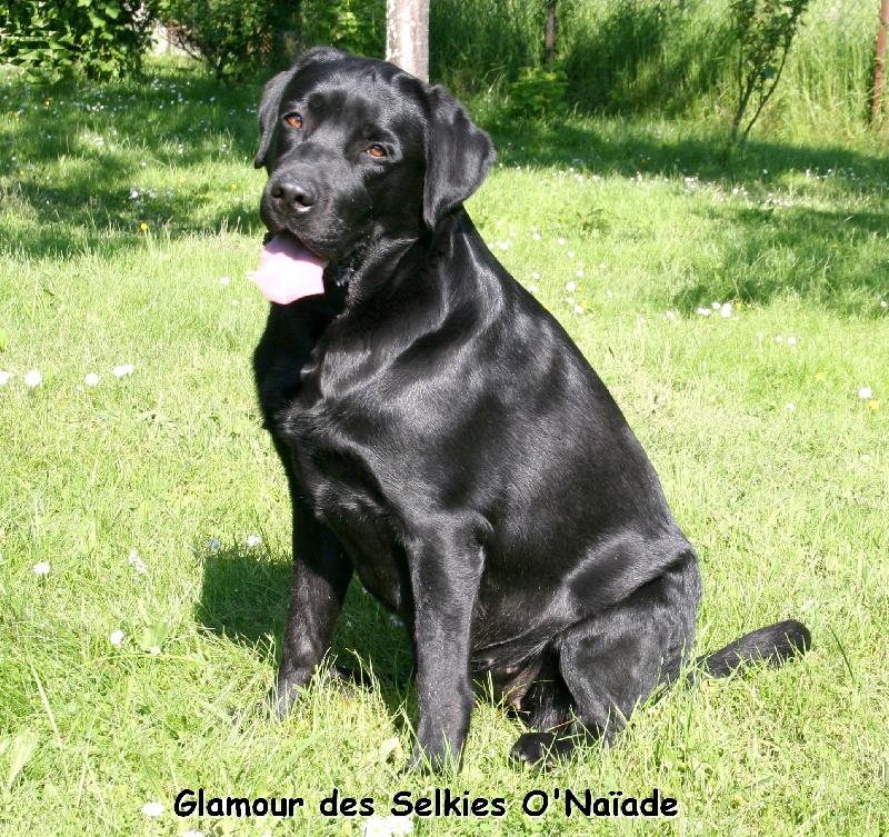 Glamour ebony nymphéa Des Selkies O'naïade
