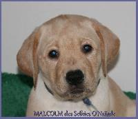 MALCOLM DES SELKIES O'NAÏADE
