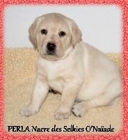 PERLA Nacre DES SELKIES O'NAÏADE