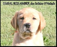 OURAL RED AMBER DES SELKIES O'NAÏADE