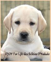 O'JOY FOR LIFE DES SELKIES O'NAÎADE