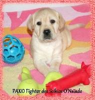 PAKO Fighter DES SELKIES O'NAÏADE