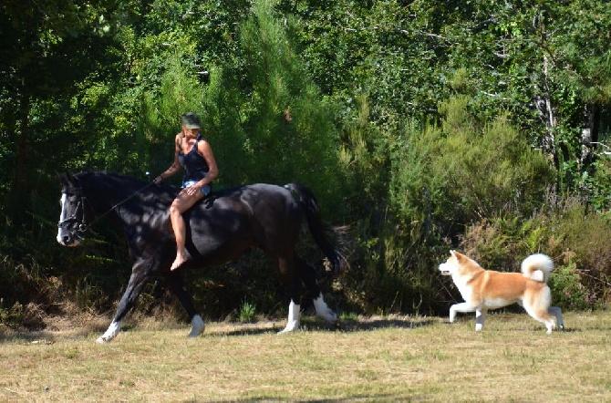 Of Sara Hana Kensha - Visite de l'élevage sur rdv