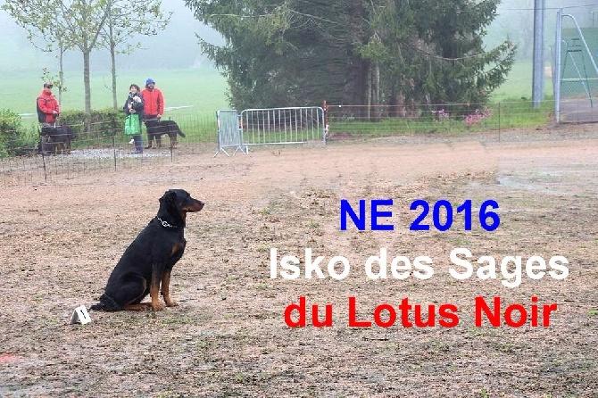 Des Sages Du Lotus Noir - Nationale d'Elevage  2016