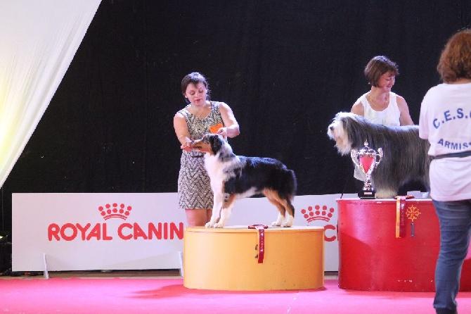 Of Winner Mistral - Belle victoire - Exposition de Narbonne