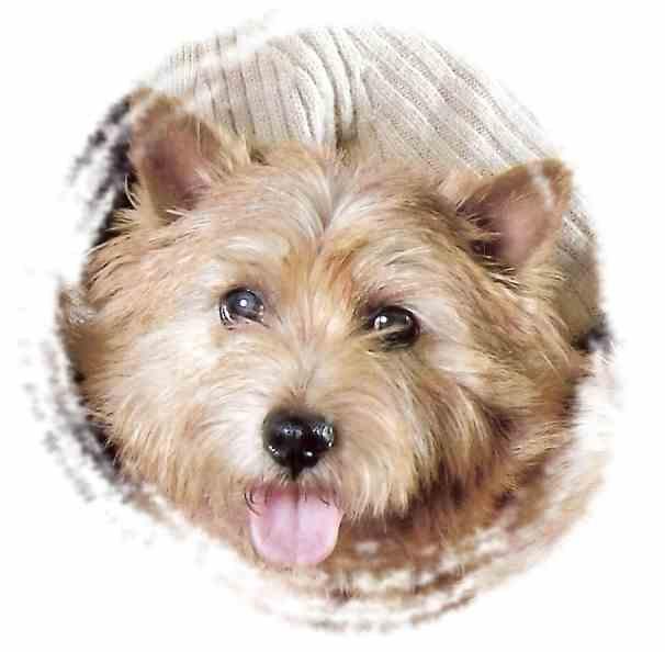 Chien - Elevage Du Bocage Des Soeurs - eleveur de chiens ...