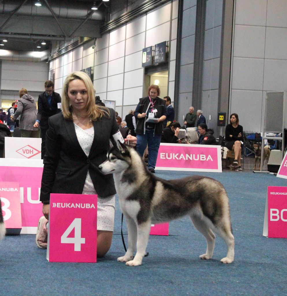 Player's Dream - World Dog Show Leipzig
