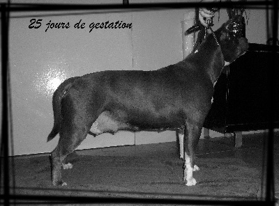 Of Timeless Pride - Confirmation de gestation