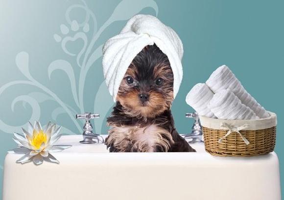 Accueil vergers des hesp rides pension petites races elevage canin berger allemand - Le salon de toilettage petshop ...