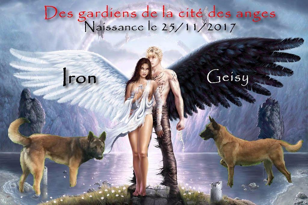 Elevage des Gardiens De La Cité Des Anges