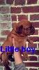 little boy devient tayson