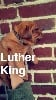 luther king devient layton
