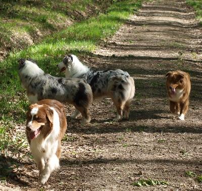 Du Petit Mont D'éden - Nationale d'élevage 2012 Cerilly