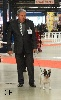 - CACS PARIS DOG SHOW 2016