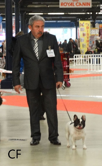 Du Clos De La Fruitiere - CACS PARIS DOG SHOW 2016