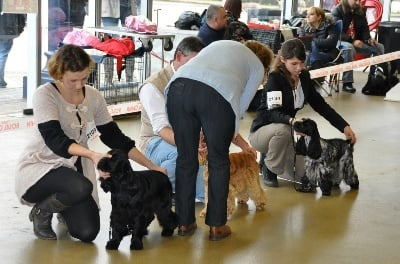 So sweet and Lovely - Expo du Paris dog Show !