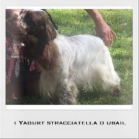 I'yaourt stracciatella D'ubail