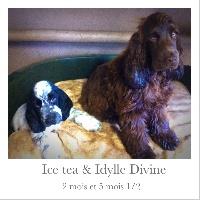 Ice tea de la Belle Andrine