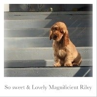 So sweet and Lovely Magnificient riley